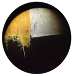 colilla-cigarro-09